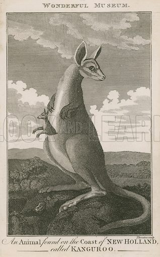 An animal found on the coast of New Holland called a Kangaroo. Published in the New Wonderful Museum and Extraordinary Magazine.