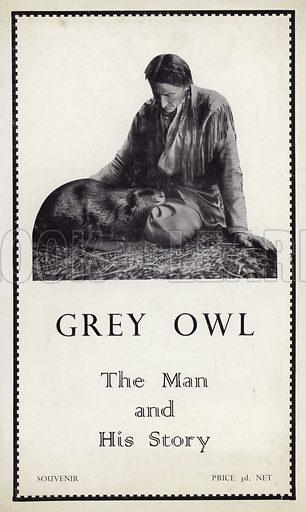 Grey Owl, picture, image, illustration