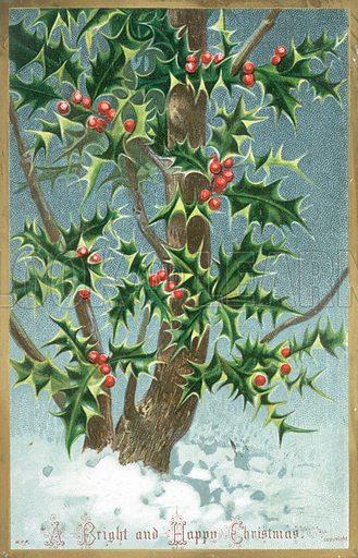 Holly Tree, Christmas Card.