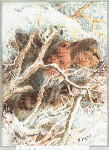 Robins sitting on branch, Christmas Card