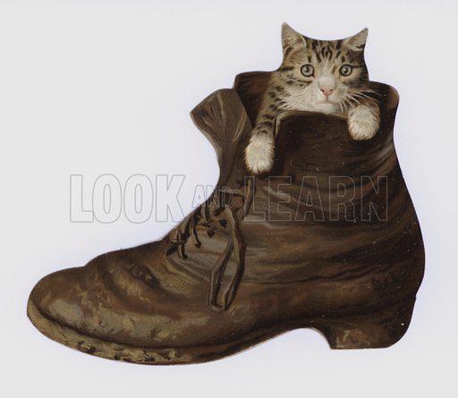 Kitten in a boot
