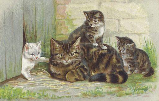 Tabby cat with three kittens