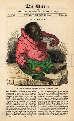 Front page of The Mirror from 13 January 1838 celebrating the arrival of an Orangutan at the Zoological Society's Gardens in Regent's Park, London.