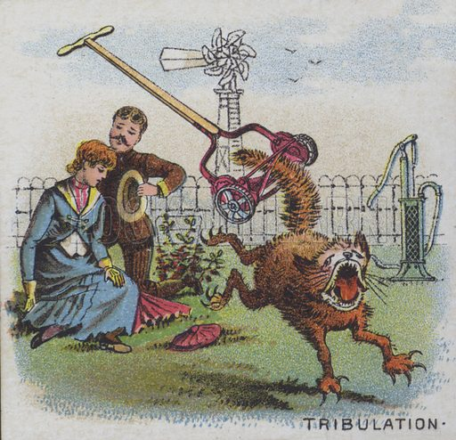 Tribulation - a cat with its tail caught in a lawnmower.