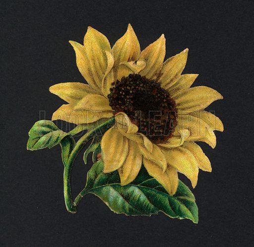 Victorian scraps: Sunflower