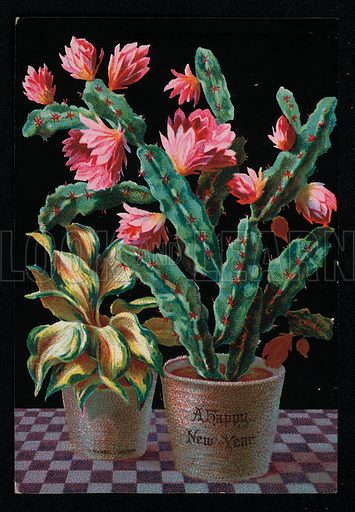 Exotic house plant and cactus, New Year's greetings card, late 19th century.
