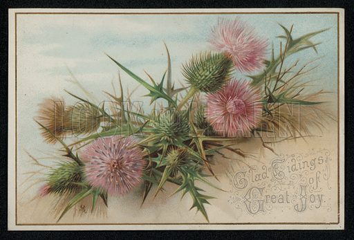 Pink thistles, Christmas greetings card, late 19th century.