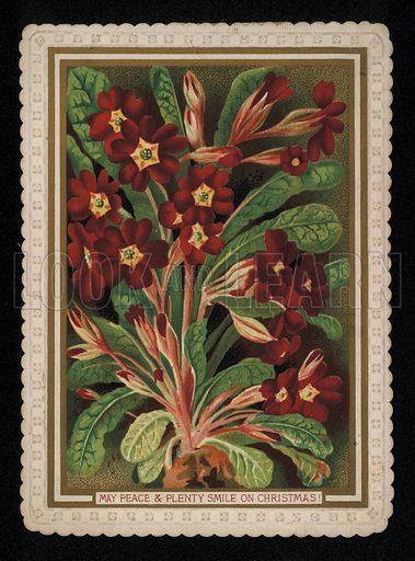 Dark red primrose, Christmas greetings card, late 19th century.