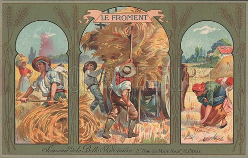 Harvesting wheat. Postcard, early 20th century.