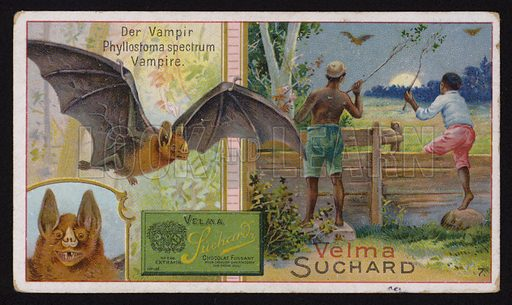 Vampire bat. Educational trade card, early 20th Century.
