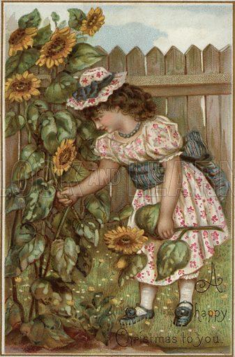Girl picking sunflowers in a garden