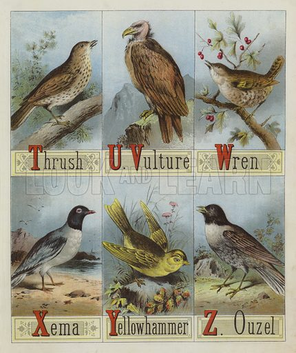 Alphabet of Birds. Illustration for Book of Picture Alphabets (T Nelson, c 1880).