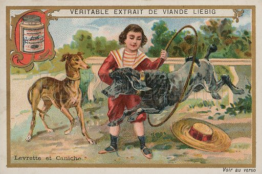 Greyhound and poodle. French educational card.