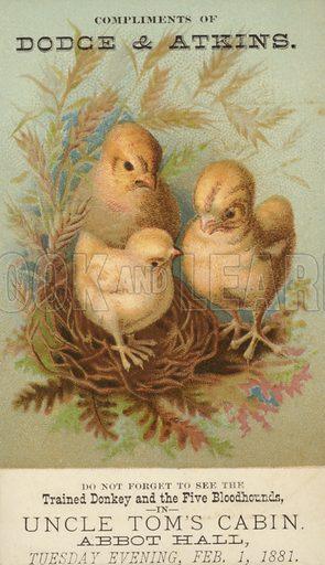 Three Baby Chicks in Nest.