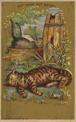 Three Weary Cats.