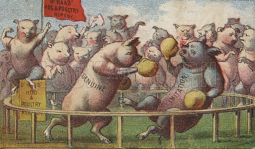 Hogs in the Boxing Ring