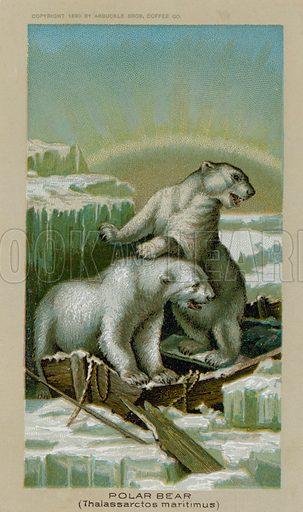 Polar Bear, Thalassarctos Maritimus. Trade card, late 19th or early 20th century.
