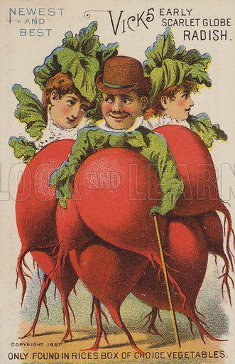 Vicks Early Scarlet Globe Radish