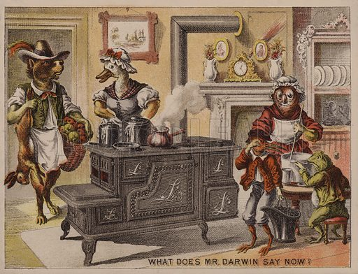 What does Mr Darwin say now? American trade card for the Leader cooking stoves manufactured by Eddy, Corse & Co, Troy, New York.