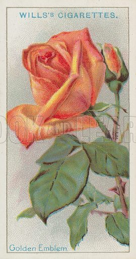 Golden Emblem. Wills's cigarette card, issued early 20th century.