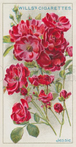 Jessie. Wills's cigarette card, issued early 20th century.
