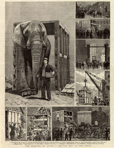 The Removal of Jumbo. Appeared in The Graphic 1 April 1882.