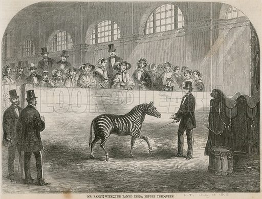 Mr Rarey with the tamed zebra before the Queen