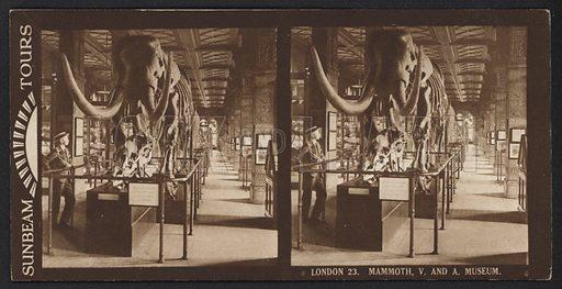 London, Mammoth, Victoria and Albert Museum