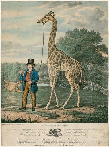 Portrait of the Giraffe, 1827.