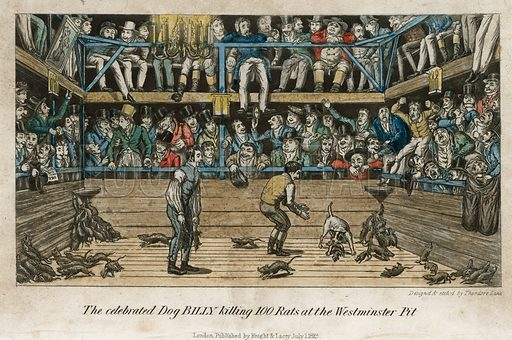 The celebrated dog billy killing 100 rats at the Westminster Pit. From Egan's Anecdotes of the Turf, 1827.