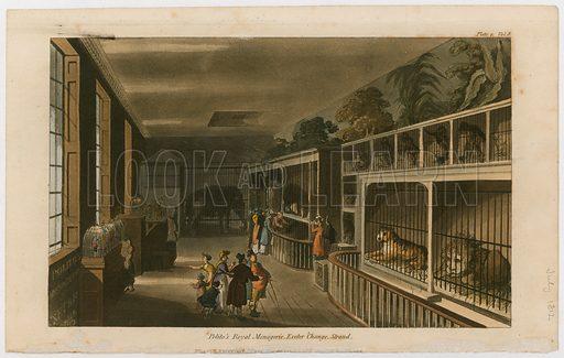 Polito's Royal Menagerie, Exeter Change, Strand. Published 1812.