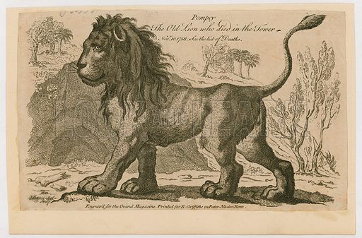 Pompey, the most popular lion at the Tower of London. 1758.