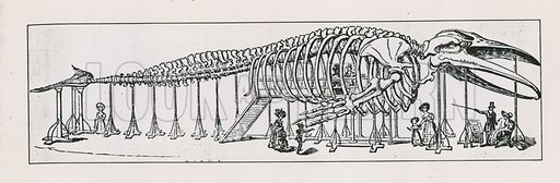 The whole skeleton lounge at Charing Cross. Mirror of Literature, 1831.