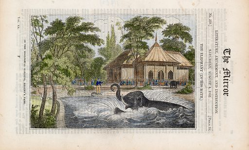 The elephant in his bath at the zoo in Regent's Park. From the Mirror 4 August 1832.