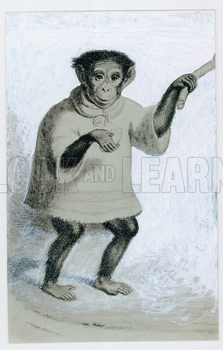 Tommy, the London zoo's first chimpanzee, was very delicate and, despite being kept in the keeper's house, died within six months. Background painted out.
