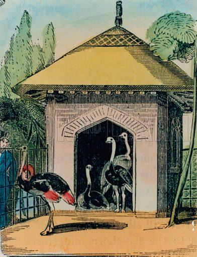 Ostrich and emu house at the London zoo. 1840s.