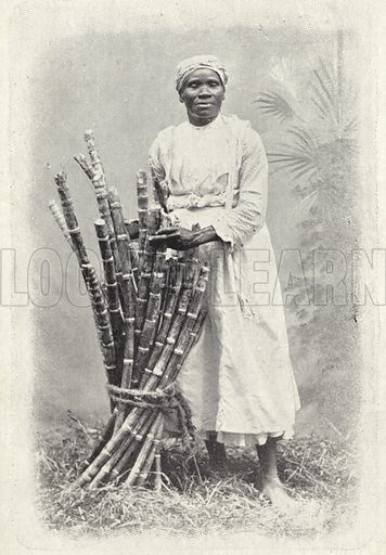 Sugar can seller, Barbados.