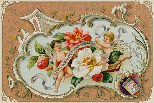 Camelia.  Liebig card, late 19th century/early 20th century.