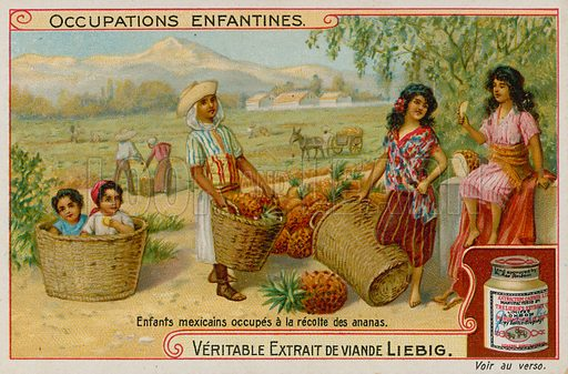 Mexican Children Gathering the Pineapple Harvest.  Liebig card, late 19th century/early 20th century.