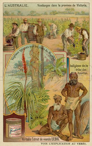 Winegrowers in Victoria, Aranda aborigines and typical plants along the Murray riverbanks. Liebig card, late 19th century/early 20th century.