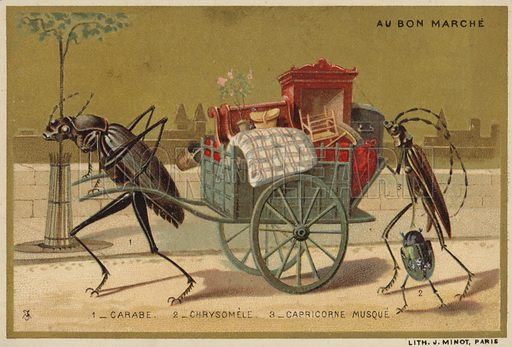 insects, picture, image, illustration
