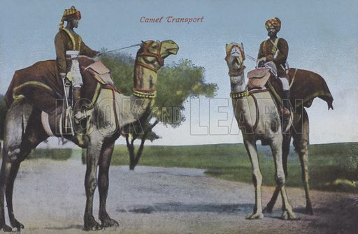 Modes of transport, men on camels, North Africa. Postcard, late 19th or early 20th century.