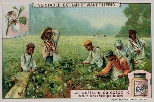 One of a series of Liebig cards on the production of cotton. Early 20th century.