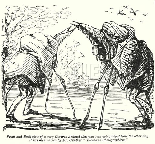 Punch cartoon: nature photographers (Elephans Photographicus). Illustration for Punch, Volume 44, January – June 1863.