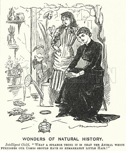 Punch cartoon: Wonders of Natural History. Illustration for Punch, Volume 84, January – June 1883.