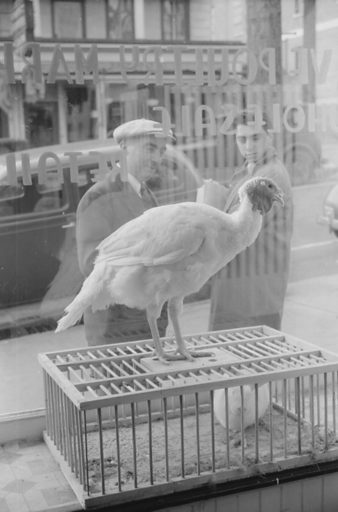 A butcher shop window. Norwich, Connecticut. Date 1940 Nov.
