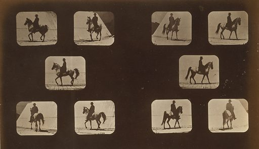 Horses. Walking. Photograph shows two series of five consecutive images of a man riding a horse named Mahomet, walking. Date c1881.