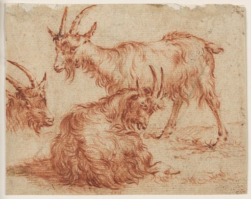 """Anonymous drawing after a passage in an etching by Nicolaes Pieterz Berchem, from the Animalia series, """"Three Goats under a Tree."""" Three goats are depicted: one standing and seen from the left, one lying down and seen from behind, and another seen from the right at left. Made in: Netherlands. Date: 1650s. Record ID: chndm_1941-49-84."""
