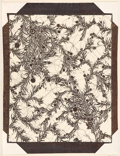 A design of clumps of juniper branches and leaves with scattered berries of varying sizes is created by cutting away most of the ground leaving the positive of the design. The interstices of the design are supported by silk thread. Date: 1830s. Record ID: chndm_1950-123-2.