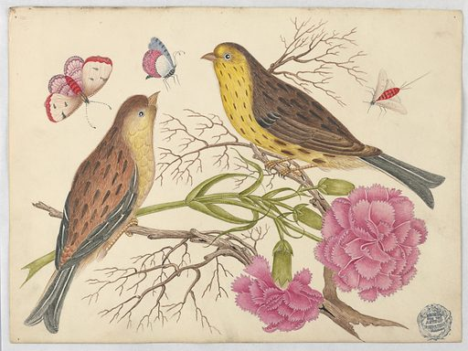 Two Brown-and-Yellow Birds on Branches with Carnations and Insects. Date: 1800s. Record ID: chndm_1923-22-12.